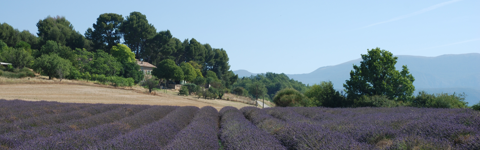 Provence | Regions of France | Green Jersey French Cycling Tours