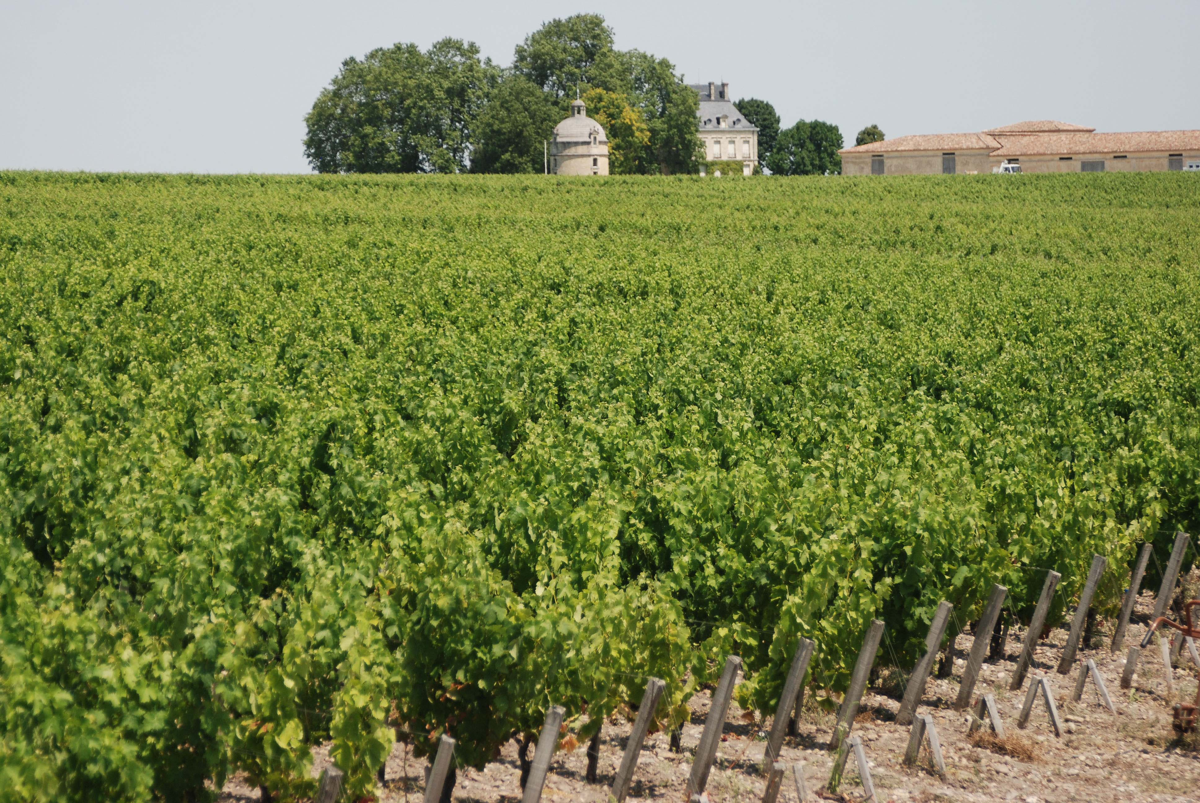 World famous vineyards in the Bordeaux region
